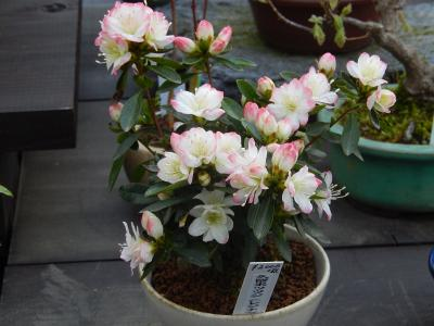 西武百貨店9階の「食と緑の空中庭園」を訪問する・・誠香園で珍しい早春の花を見る