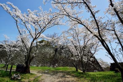 岡城の桜2018