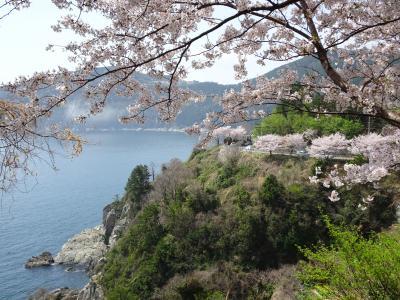 巨済島 桜の名所 チャンスンポ桜の道
