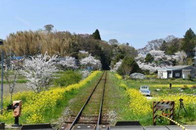 いすみ鉄道:桜と菜の花