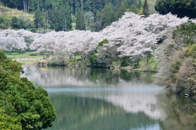 安岐ダムの桜2018