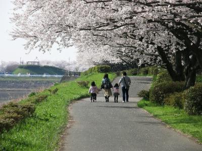 権現堂堤桜まつりは大混雑、工夫し桜堤を楽しみました ー 1.権現堂公園(1号公園)から権現堂堤まで