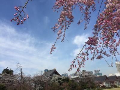 2018年Tokyo Sakura 桜さくら