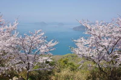 2018 紫雲出山の桜
