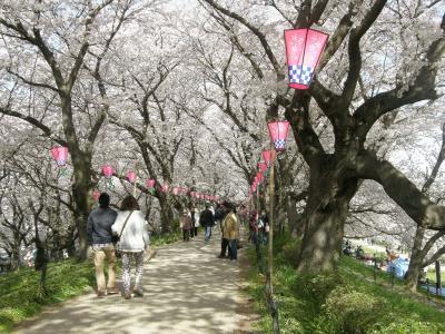 権現堂堤桜まつりは大混雑、工夫し桜堤を楽しみました ー 2.権現堂桜堤を歩く