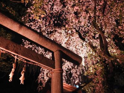 子安神社夜桜参拝