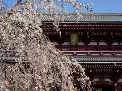 江戸から続く桜の名所 向島