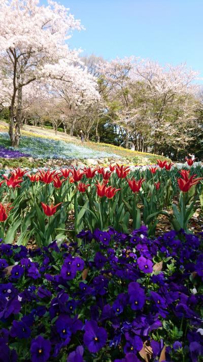 広島、山口、福岡☆桜を追いかける旅☆