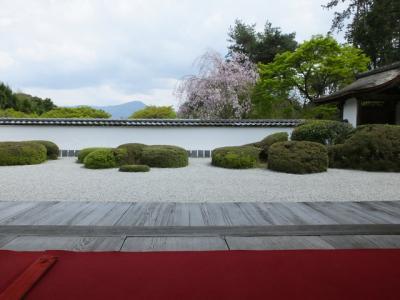京都の桜を撮りに行こう その五 八重桜編!2018年