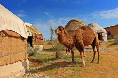 紅砂漠の青蜥蜴/遊牧民のユルタでキャンプ♪ワイルド女子旅【碧きスタンの都へ-5】