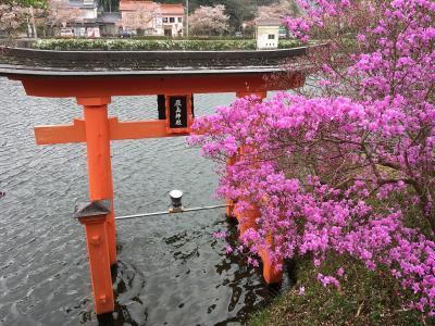 花見先を探してやっと見つけた庄原上野公園の桜