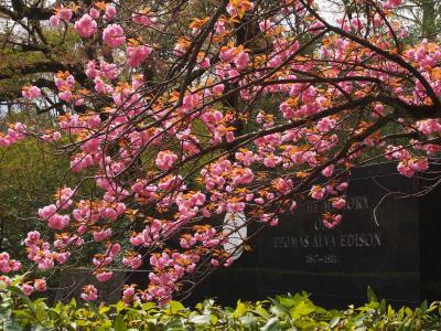 石清水時八幡宮と背割り堤と伏見で熱燗。思いのほか寒かった京都弾丸旅。