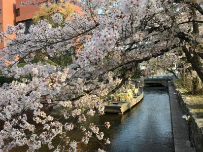 春の京都 2018 ⑥ 鴨川-京都御苑散策