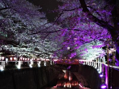2018年週末花見計画 目黒川沿いの桜を愛でる編