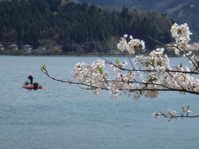 2018.4.8海津大崎の桜