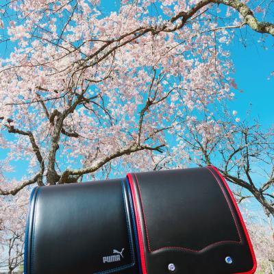 桜を求めて(o^^o)