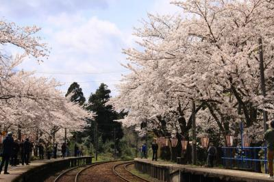 桜のトンネル~能登さくら駅へ