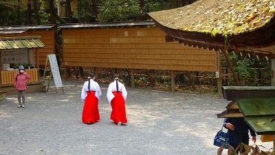 大和路4ッの枝垂れ桜巡りツアー(04) 大神神社参拝と枝垂れ桜 下巻。