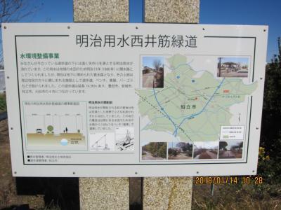 三河八橋から知立までハイキング(明治用水西井筋緑道)