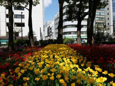 横浜公園は「ガーデン ネックレス 2018」の会場に 上