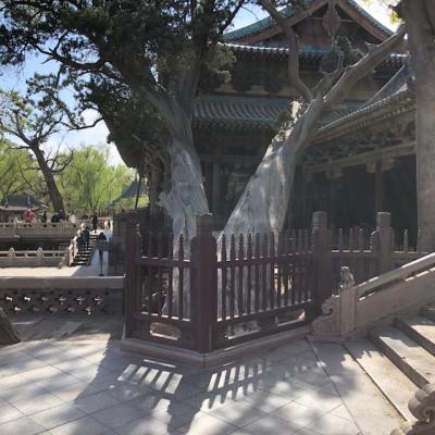 三千年の樹