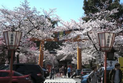 京の都の春を堪能 - 平野神社