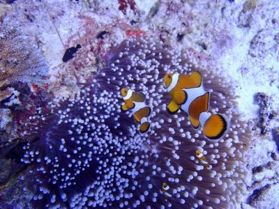 タイ シミラン諸島でダイビング