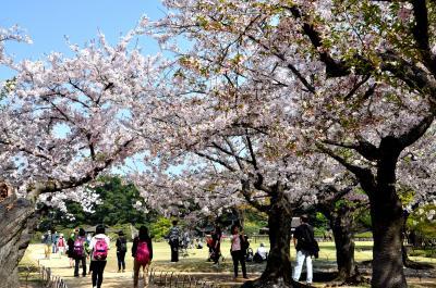 続・おじさんの一人旅、鳥取から岡山へ・・春爛漫桜咲き誇る後楽園を訪ねて