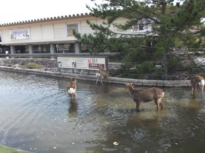 日帰りで奈良市内ならまち観光(#^^#)in奈良県④