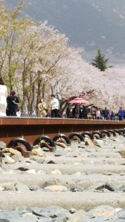 桜舞散る、鎮海へ   ~南浦洞から日帰りの旅~