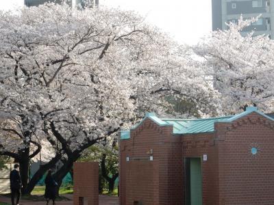 咲き急ぐ桜を追いかけて~音無親水公園