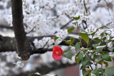 枝川緑道公園 ~ 西川緑道公園