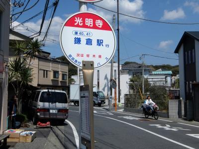 鎌倉散歩 春の光明寺 下