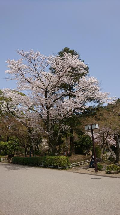 岐阜公園  金華山