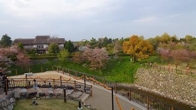 大和路4ッの枝垂れ桜巡りツアー(14) 郡山城跡の枝垂れ桜 上巻。
