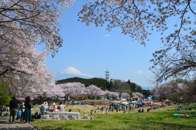 桜と富士山 =岩本山公園= 2018.04.01