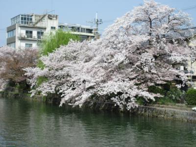 2018 春の京都③