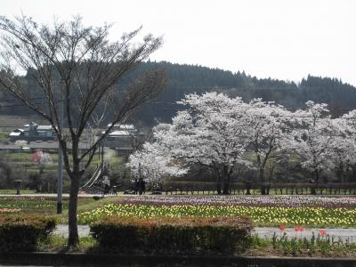 桜を楽しむドライブ(大分方面)