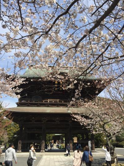 春の鎌倉・江の島一人旅①