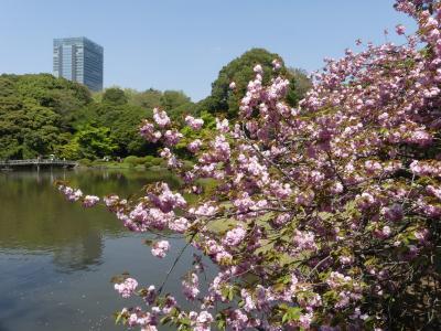 新宿御苑・日本庭園のサクラ_2018_遅咲きのサクラと綺麗な新緑を楽しめました。(新宿区・内藤町)