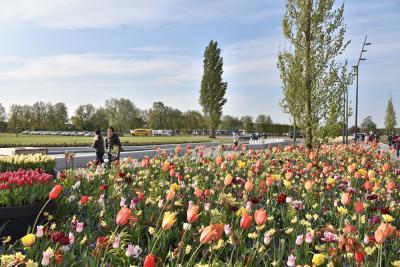 2017年(1)<オランダ >花と絵の鑑賞1日旅 キュ-ケンホフ公園とマウリッツハイス美術館