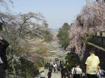 桜のこんぴらさん&栗林公園の夜桜&ゲストハウス&まさかの猫カフェ(=^ェ^=)