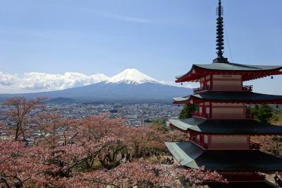 新倉山浅間公園 「富士の眺め日本一」富士山、五重塔、さくら