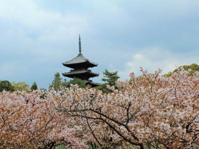 春の京都盛りだくさん♪仁和寺の御室桜と旬のタケノコ!梅宮大社のニャンコに癒され猫カフェに行っちゃったぁ&ランチは創作中華「星月夜」