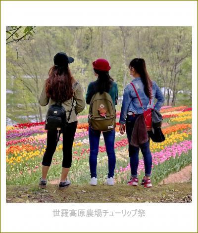 Solitary Journey [1913] 感動のお花畑風景♪標高約500mの高原に国内最大級のチューリップ畑が出現!<世羅高原農場>広島県世羅町