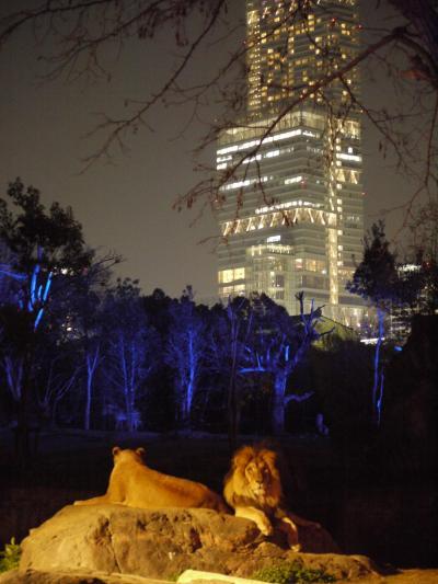 念願の!! 天王寺動物園 Night Zoo行ってきた。