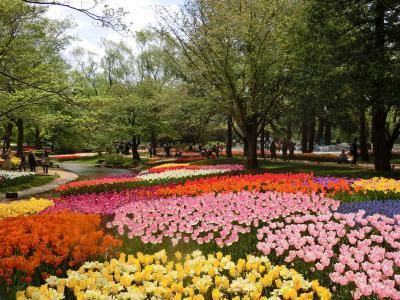 春色~チューリップを求めて☆彡立川 昭和記念公園☆彡