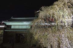 上田城跡公園の夜桜
