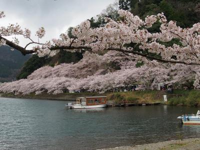 今年の桜は10日早い!大阪城・大和郡山城跡・海津大崎