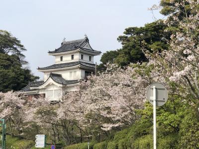 2018 APR 【日本100名城No.90】平戸城 桜の季節に400年前の日本の玄関口を歩く